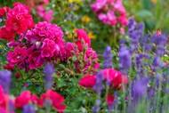 Roses and Lavender High Tea Workshop.