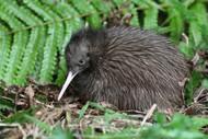 Kiwi Experience.