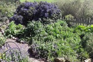 Permaculture Farm and Food Forest Tour.