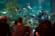 National Aquarium of New Zealand Celebrates Children's Day.