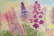 Judy Woodhead - Recent Work In Watercolour.
