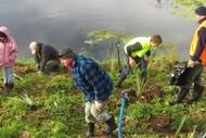 Waitangi Estuary Wetlands Community Planting Day.